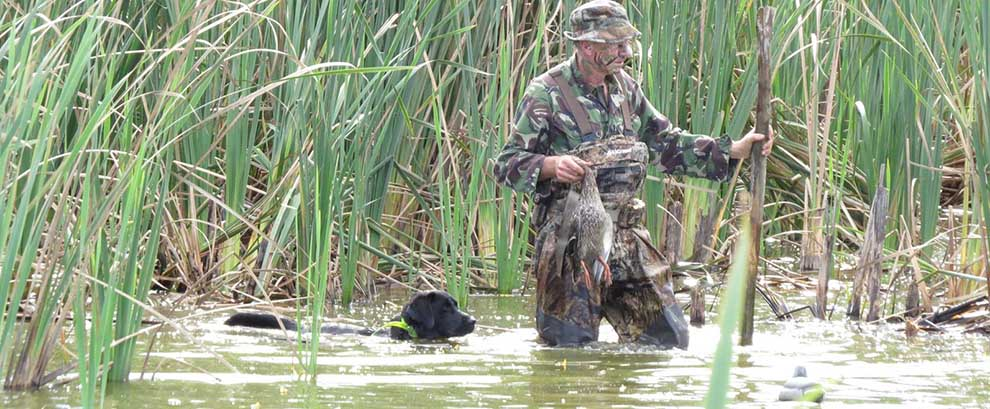 Black Knight on 1st day duck shooting 2016. Thanks Jeff for great pics.
